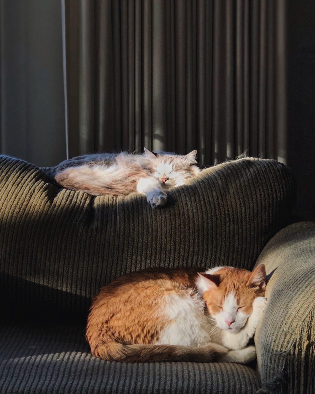 sofa-katte
