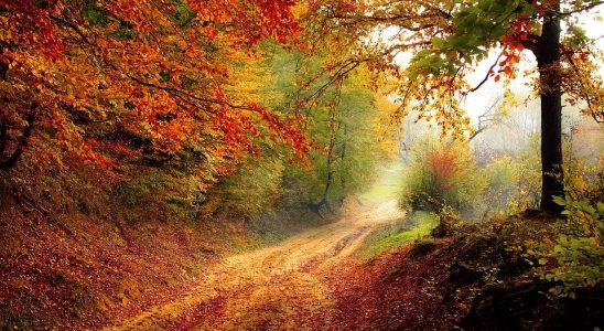 Efterår i naturen