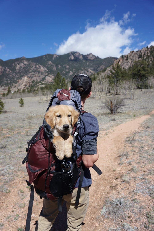 På eventyr med hund
