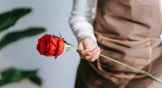 kvinde og plante